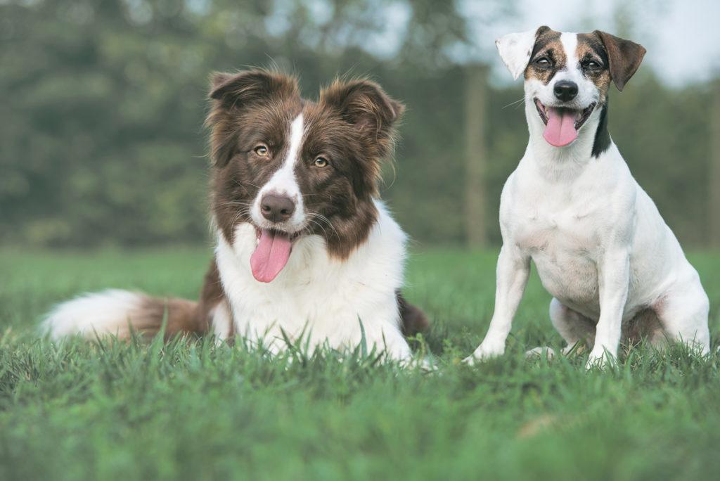 Yuna e Stella