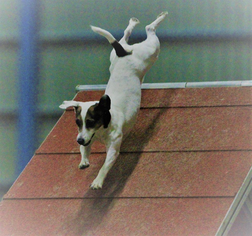 Stella mentre vola sulla palizzata a Spresiano (TV)